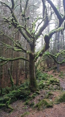 North Wales Walking & Running